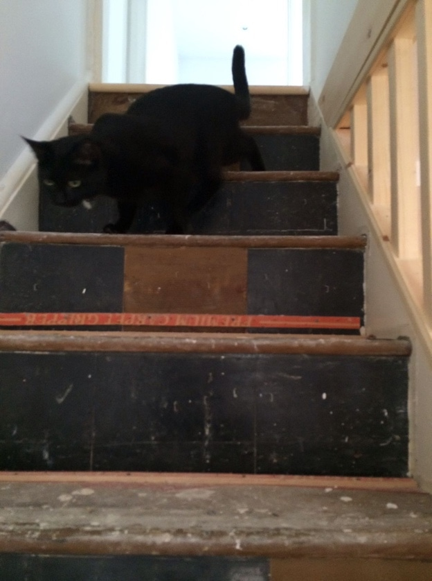 A cat on some unfinished stairs
